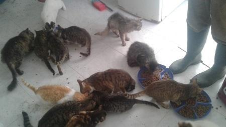 Aide CCTNA pour les animaux du refuge de la PAT Croque29