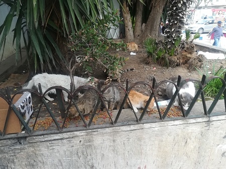 Aide CCTNA pour les animaux de Meriem Ct_mer10