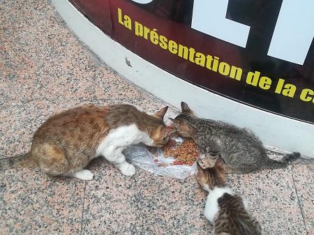 Aide CCTNA pour les animaux de Meriem Ct_mer11