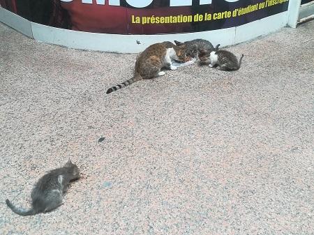 Aide CCTNA pour les animaux de Meriem Ct_mer12