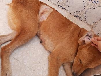 Les chiens de l'Usine de DEN-DEN Den_de10