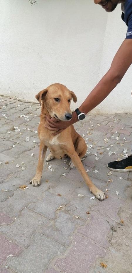 Les chiens de l'Usine de DEN-DEN Denden10