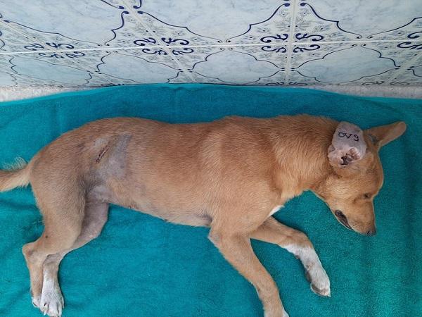 Les chiens de l'Usine de DEN-DEN Denden22