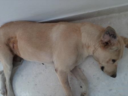 Les chiens de l'Usine de DEN-DEN Denden31