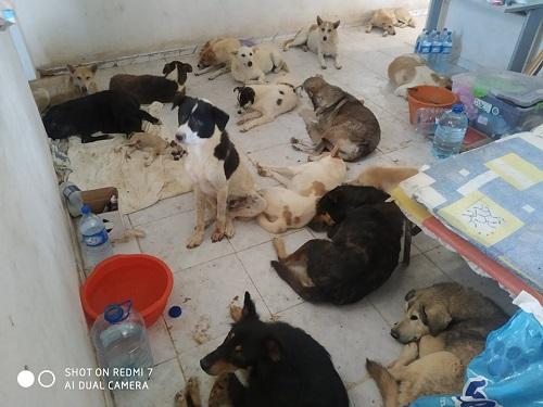 Massacre à Djerba : nuit du 21 au 22 juillet 2020 Djerba10