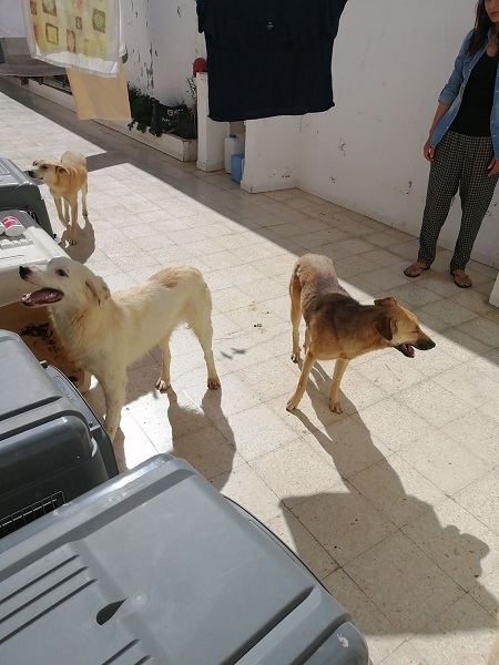 Pandémie COVID19 - Nos protégés bloqués à Tunis Douche11
