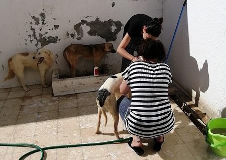 Pandémie COVID19 - Nos protégés bloqués à Tunis Douche13