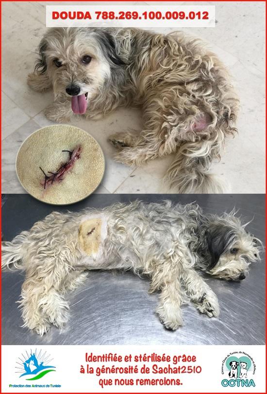 JANVIER 2019 : Aide pour stériliser 6 chiens femelle du refuge de la PAT Doudam10