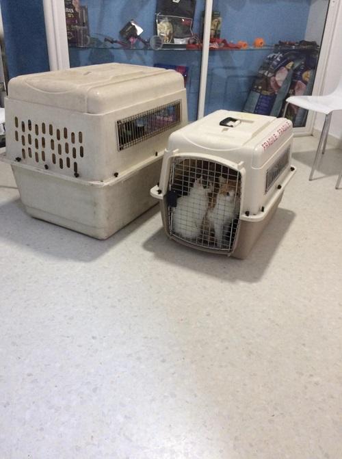 Aide CCTNA pour les animaux de HOUDA - Page 2 Dr_mon11