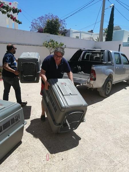 Pandémie COVID19 - Nos protégés bloqués à Tunis Dzopa107