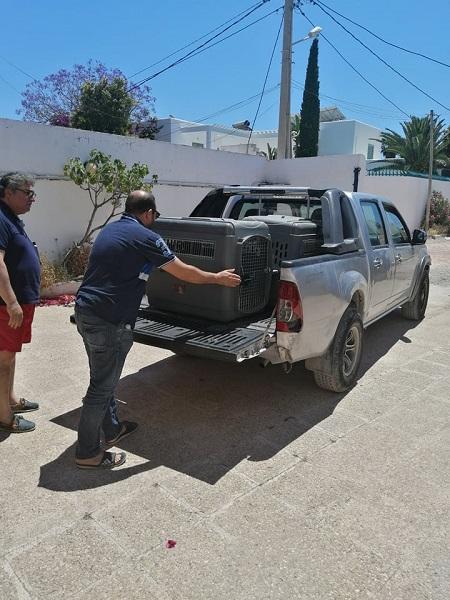 Pandémie COVID19 - Nos protégés bloqués à Tunis Dzopa108