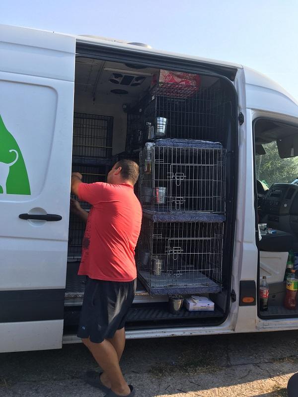 Rapatriement  30 chiens de Bulgarie - 25 & 26 septembre 2018 Dzopar14