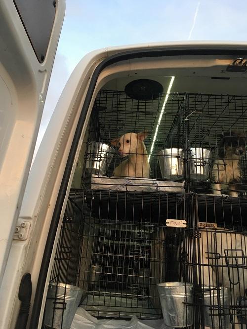 Rapatriement 30 chiens de Bulgarie du 7 & 8 décember 2018 Dzopar16