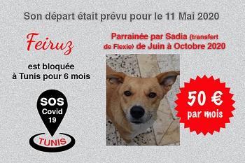 Pandémie COVID19 - Nos protégés bloqués à Tunis - Page 2 Feiruz16