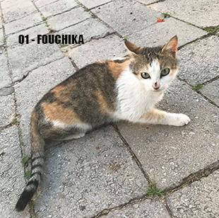 Campagne stérilisation des chats errants - Tunisie 2020 Fouchi10