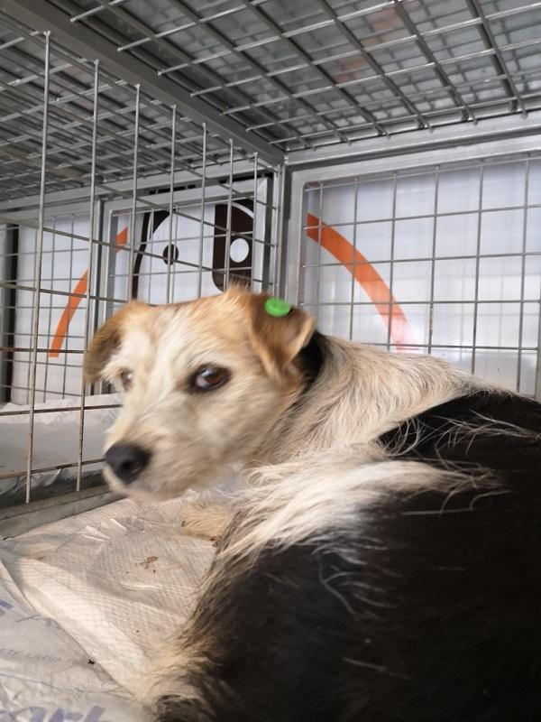 FOXO, identifié LHF 738, en FAMILLE en Bulgarie Foxo_b11