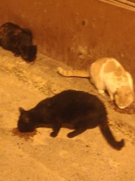 Aide CCTNA pour les animaux de Meriem Gdoura14