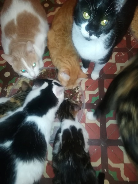 Aide CCTNA pour les animaux de Meriem Gdoura15