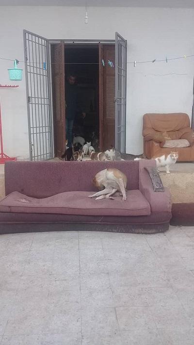 Aide CCTNA pour les animaux de HOUDA Houda_14