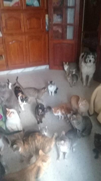 Aide CCTNA pour les animaux de HOUDA Houda_15