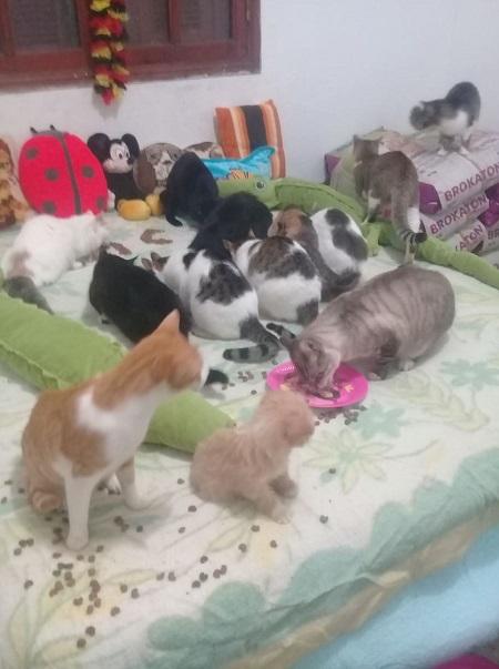 Aide CCTNA pour les animaux de HOUDA Houda_19