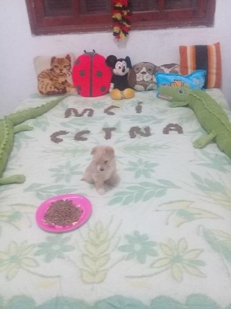 Aide CCTNA pour les animaux de HOUDA Houda_20