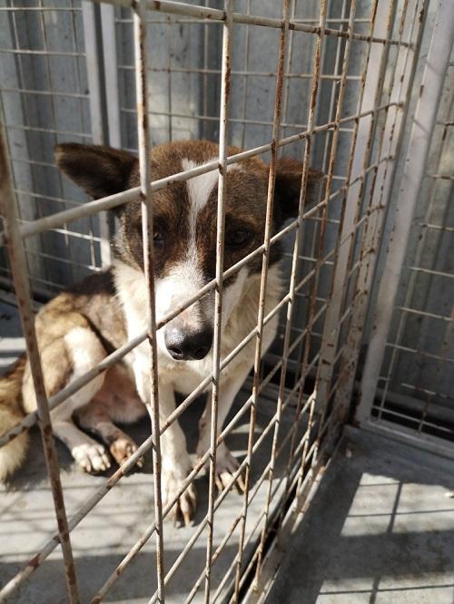 Stérilisation des animaux errants à DEVNYA - Octobre 2018 Lhf_po20