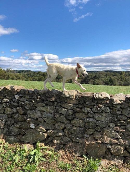 Aide pour stériliser 22 chiens du refuge de la PAT Lili_p11