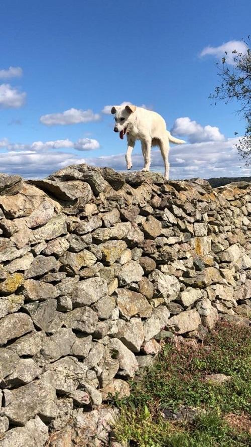 Aide pour stériliser 22 chiens du refuge de la PAT Lili_p12