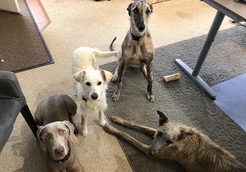 Aide pour stériliser 22 chiens du refuge de la PAT Lili_p13