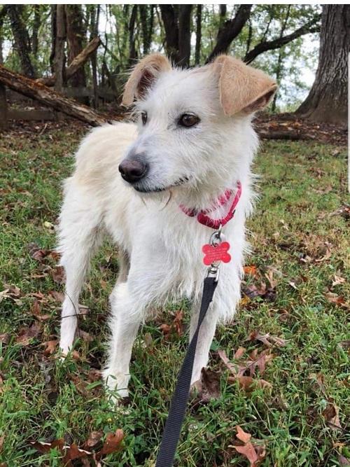 Aide pour stériliser 22 chiens du refuge de la PAT Lili_p14