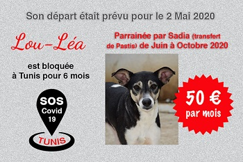 Pandémie COVID19 - Nos protégés bloqués à Tunis - Page 2 Lou_lz10