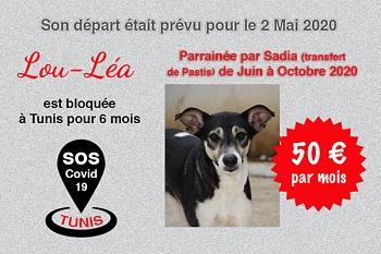 Pandémie COVID19 - Nos protégés bloqués à Tunis - Page 2 Lou_lz11