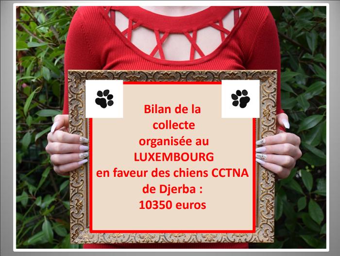 Aides du Luxembourg en faveur des chiens CCTNA de Djerba Lux_me17