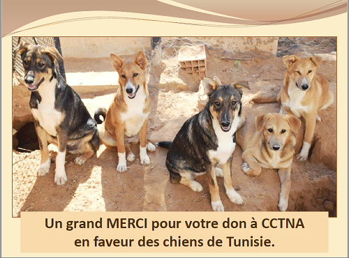 Dons du Luxembourg pour CCTNA - 2019 Merci_16