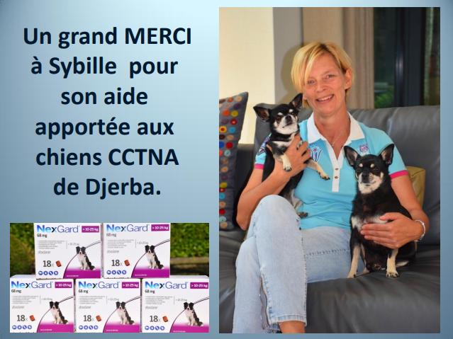 Aides du Luxembourg en faveur des chiens CCTNA de Djerba Merci_21