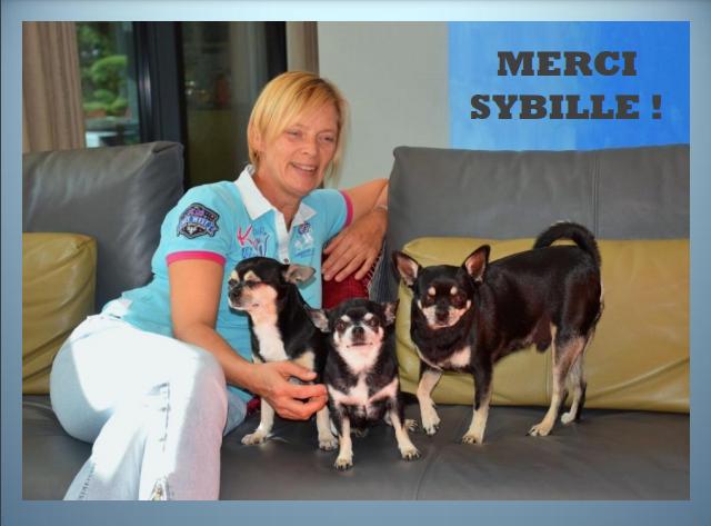 Aides du Luxembourg en faveur des chiens CCTNA de Djerba Merci_22