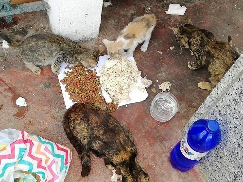 Aide CCTNA pour les animaux de Meriem Meriem13