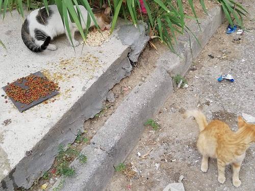 Aide CCTNA pour les animaux de Meriem Meriem14