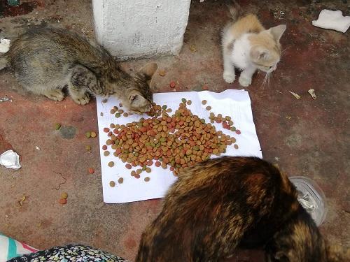 Aide CCTNA pour les animaux de Meriem Meriem17