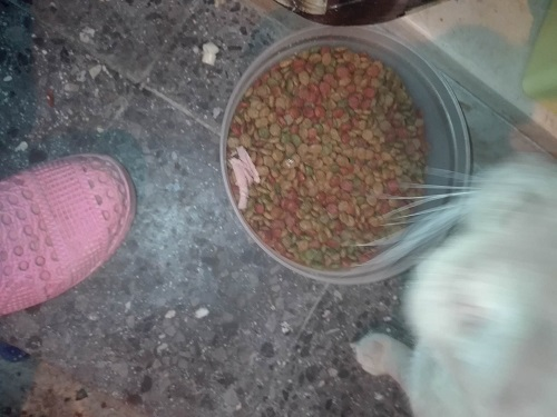 Aide CCTNA pour les animaux de Meriem Meriem21