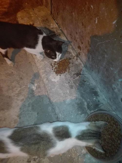 Aide CCTNA pour les animaux de Meriem Meriem25