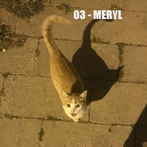 Campagne stérilisation des chats errants - Tunisie 2020 Meryl_10