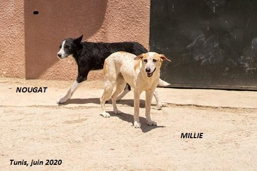 MILLIE, identifiée 788.269.100.002.095, en pension à Tunis - Page 3 Millie18