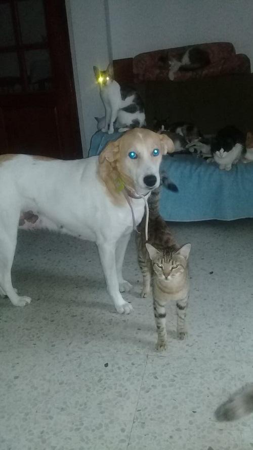 Aide CCTNA pour les animaux de HOUDA Miska_17