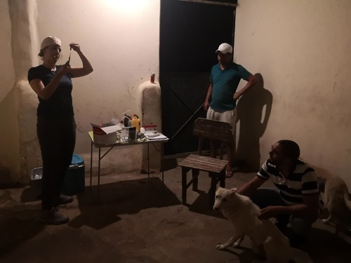 Informations concernant les chiens rescapés de Djerba Monia_10
