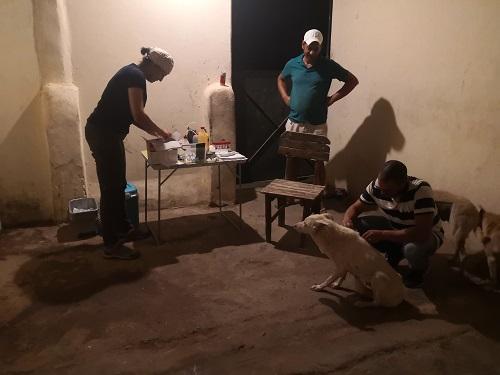 Informations concernant les chiens rescapés de Djerba Monia_11
