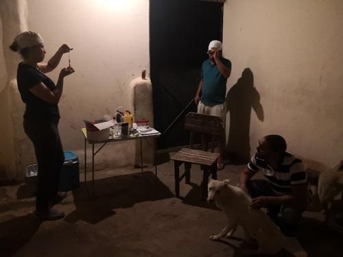 Informations concernant les chiens rescapés de Djerba Monia_12