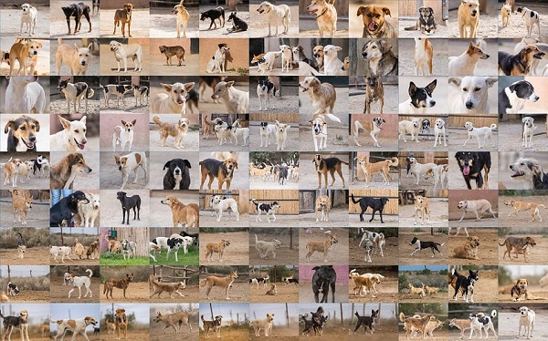 Informations concernant les chiens rescapés de Djerba - Page 2 Montag10