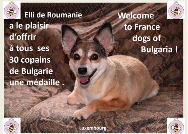 Rapatriement 30 chiens de Bulgarie - 29 ou 30 août 2018 Mzodai11